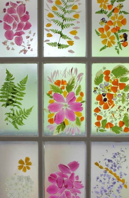 pressed flowers in glass windows